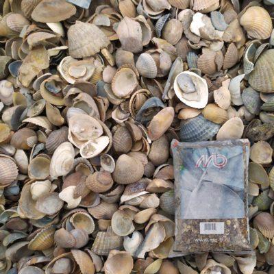 sac de coquillages